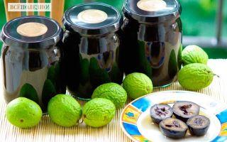 Настойка из зеленых грецких орехов: рецепт и применение в домашних условиях