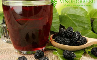 Вино из шелковицы в домашних условиях — рецепт и технология изготовления напитка своими руками