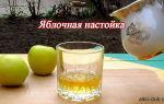 Домашняя настойка из яблок на водке (самогоне или спирту): технология приготовления напитка