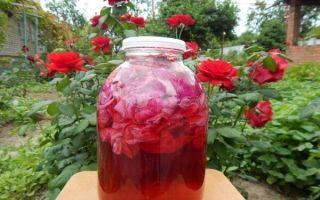 Вино из чайной розы в домашних условиях — рецепт на лепестках, необходимая техника и утварь