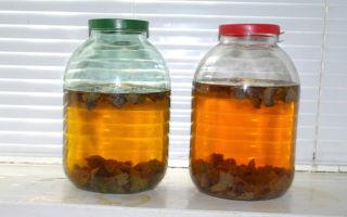 Самогон из пива – рецепт браги и перегонка продукта, подбор и подготовка пенного сырья