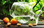 Самогон из абрикосов в домашних условиях (с дрожжами и без): секреты приготовления и вкусовые характеристики напитка