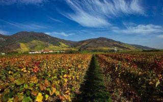 Австрийские вина: особенности, классификация и регионы производства алкоголя