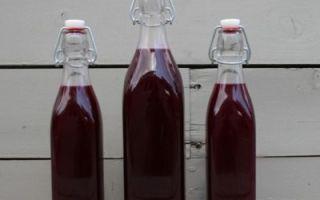 Настойка из черники на водке, самогоне, спирте: уникальный витаминный комплекс в напитке и правила его приготовления