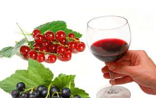 Вино из смородины в домашних условиях: популярные рецепты