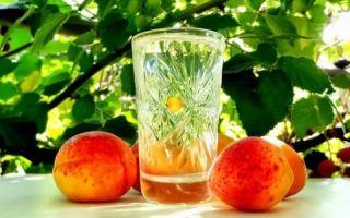 Самогон из абрикосов – 6 лучших рецептов приготовления