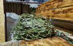 Настойка эвкалипта: рецепт приготовления и применение для здоровья, правила выбора сырья