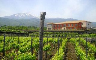 Вино Марсала: понятие и особенности сорта, виды и культура пития напитка, стоимость бутылки