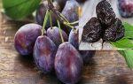 Вино из чернослива в домашних условиях – простой рецепт и описание изготовления напитка