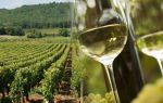 Вино Алиготе (Аligote): особенности и виды напитка, культура пития и стоимость бутылки