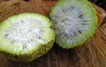 Домашняя настойка адамового яблока – рецепт и применение для лечебных целей