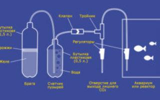 Самогон из кабачков – рецепт браги и технология перегонки напитка своими руками