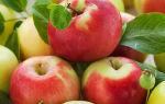 Домашняя питьевая настойка из бузины (черных ягод) – рецепт и основная характеристика кустарника