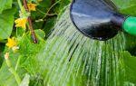 Настойка крапивы на водке – приготовление и применение напитка, полезные свойства растения