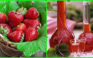 Правильный самогон из клубники – правила приготовления ягодной браги и ее перегонка