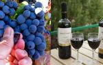 Грузинское вино Саперави: особенности и культура употребления напитка, вкусовые разновидности