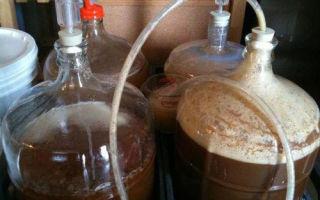 Настойка на солоде (ржаном или ячменном) с чесноком – рецепт и особенности обработки для брожения