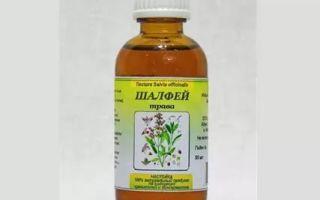 Настойка шалфея на водке (спирте) – рецепт и применение в домашних условиях, полезные характеристики