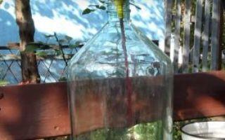 Домашний самогон из винограда – рецепт браги и перегонка, методы изготовления своими руками
