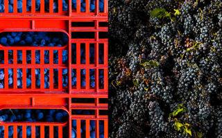 Вино Амароне (Аmarone): характеристики и особенности напитка, важнейшие особенности