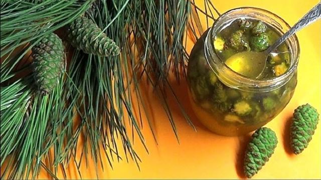 Сосновая водка – рецепт и применение настойки сосновых шишек