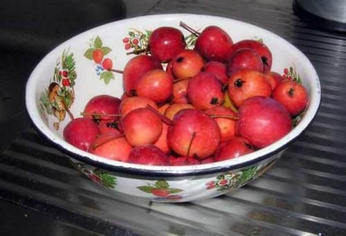 Домашнее вино из ранеток (яблок) – простой рецепт без дрожжей