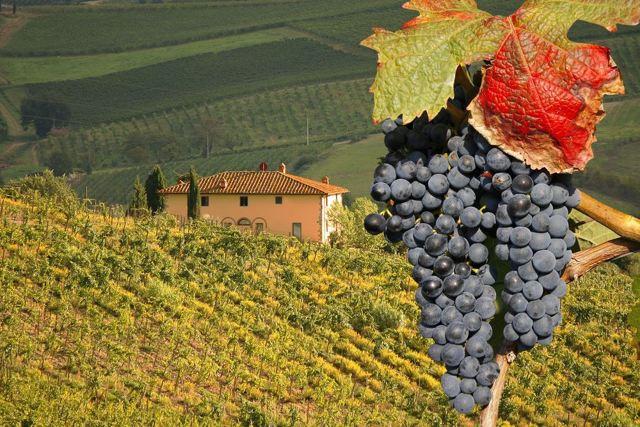 Вино Барбареско: особенности, известные марки, культура пития