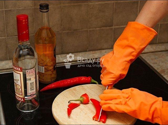 Настойка стручкового перца – рецепт и применение