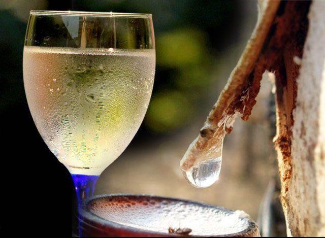 Вино из березового сока в домашних условиях