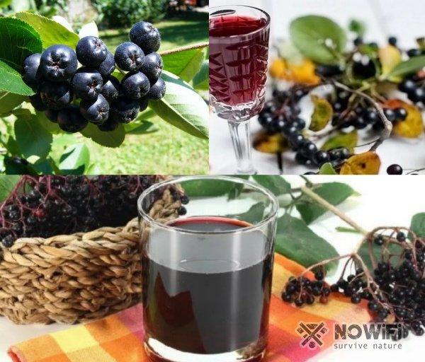 Рецепт вина из черноплодной рябины домашнего приготовления
