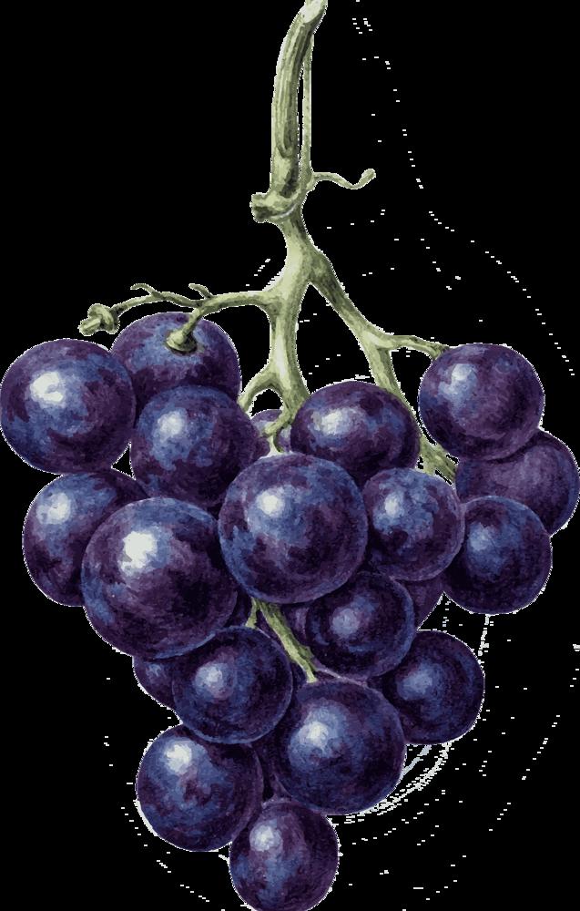 Вино из базилика в домашних условиях – простой рецепт
