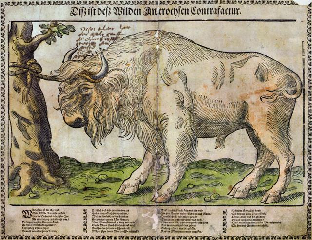 Настойка Зубровка (zubrowka) описание, история и виды марки