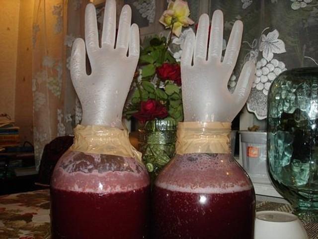 Вино из жимолости в домашних условиях – рецепт и технология