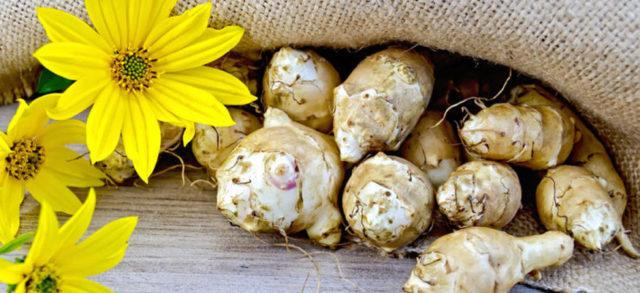 Самогон из топинамбура – рецепт браги