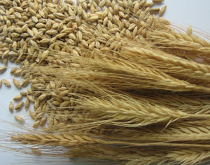 Самогон из овса (зерен или хлопьев геркулеса) – рецепт браги