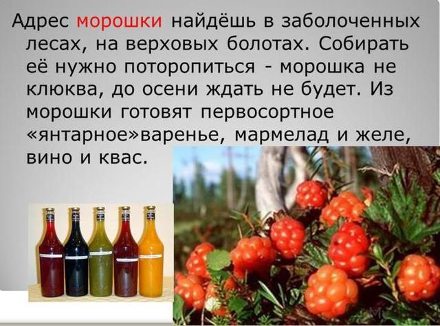 Вино из морошки в домашних условиях – рецепт и приготовление