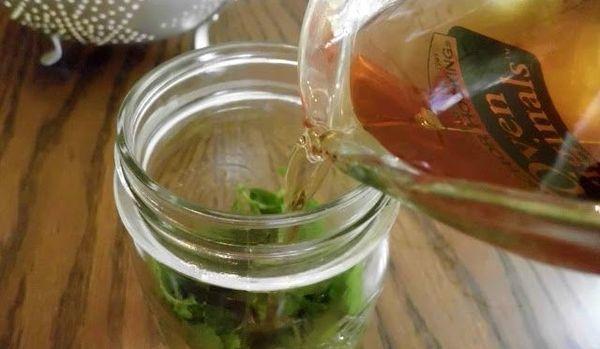 Настойка индийского лука – рецепт приготовления и применение