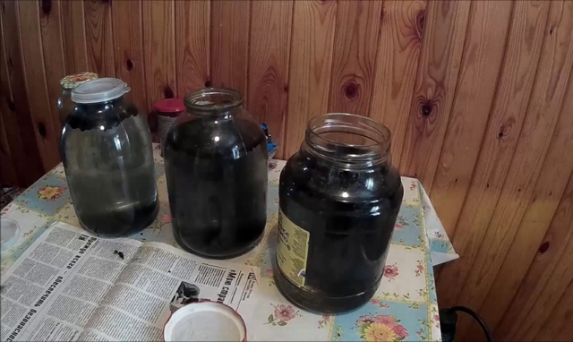 Настойка из облепихи на водке, самогоне или спирте