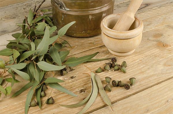 Настойка эвкалипта: рецепт приготовления и применение