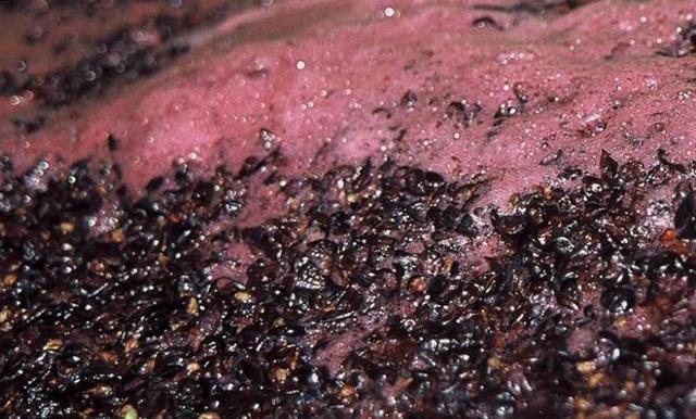 Виноградная чача без дрожжей и сахара – рецепт из ягод или жмыха