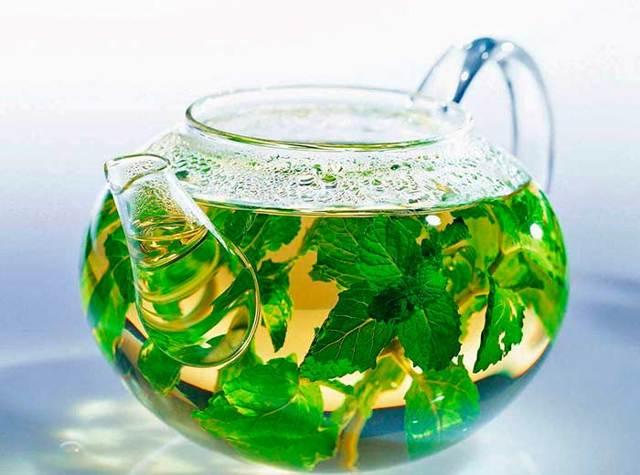 Настойка мелиссы на водке (спирте): рецепт и инструкция