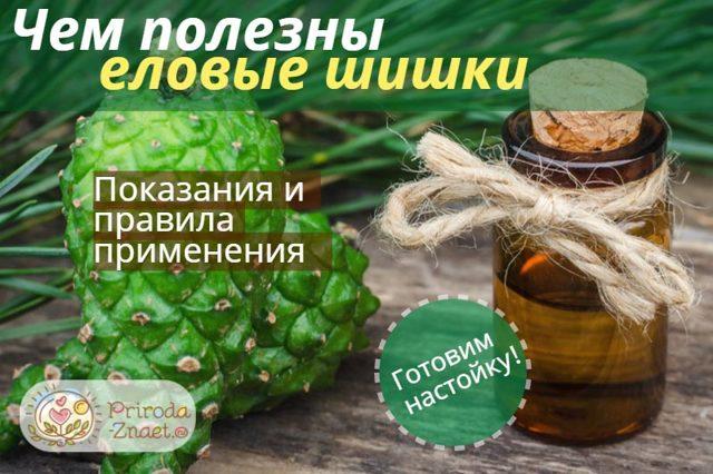 Настойки ели (шишек и хвои): рецепт и применение