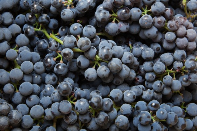 Коньяк из винограда в домашних условиях - рецепт и технология